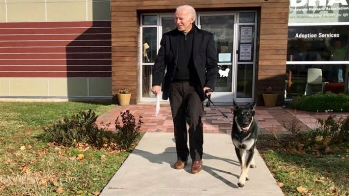 Biden injured while playing with dogs